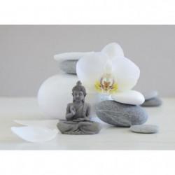 Affiche papier -  Bouddha grey   - Chatelain  -  50x70 cm
