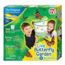 BUKI Elevage de papillons